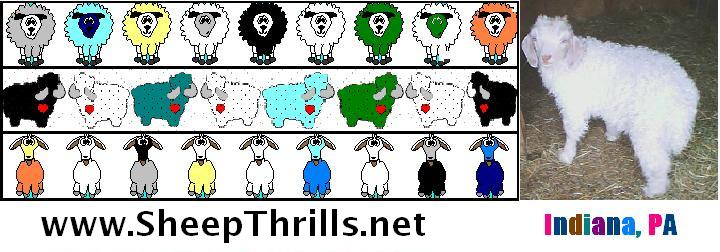 Sheep Thrills Fiber Farm